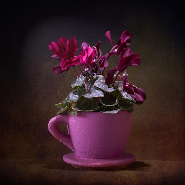 Violet, Pink, Plant, Flower, Flowerpot, Cup