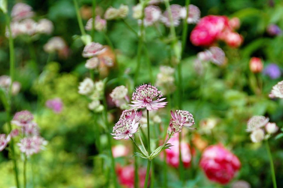 Nature, Plant, Summer, Garden, Sheet, Flower