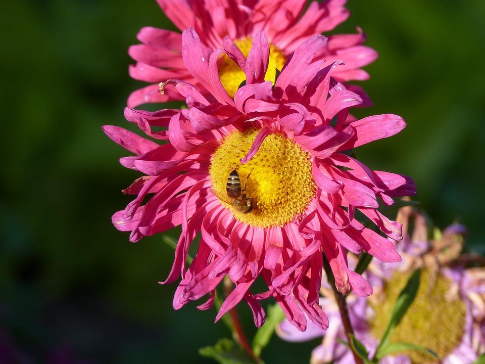 Flower, Nature, Plant, Summer