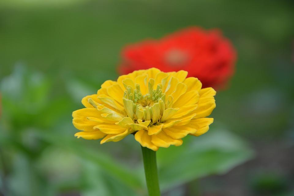 Plant, Flower, Yellow, Yellow Flower, Petals