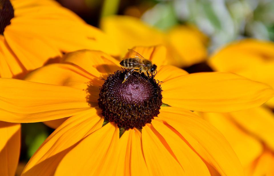 Flower, Sun Hat, Bee, Pollen, Collect, Sprinkle