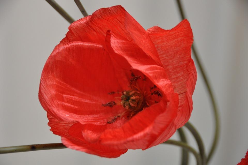 Flower, Poppy, Red