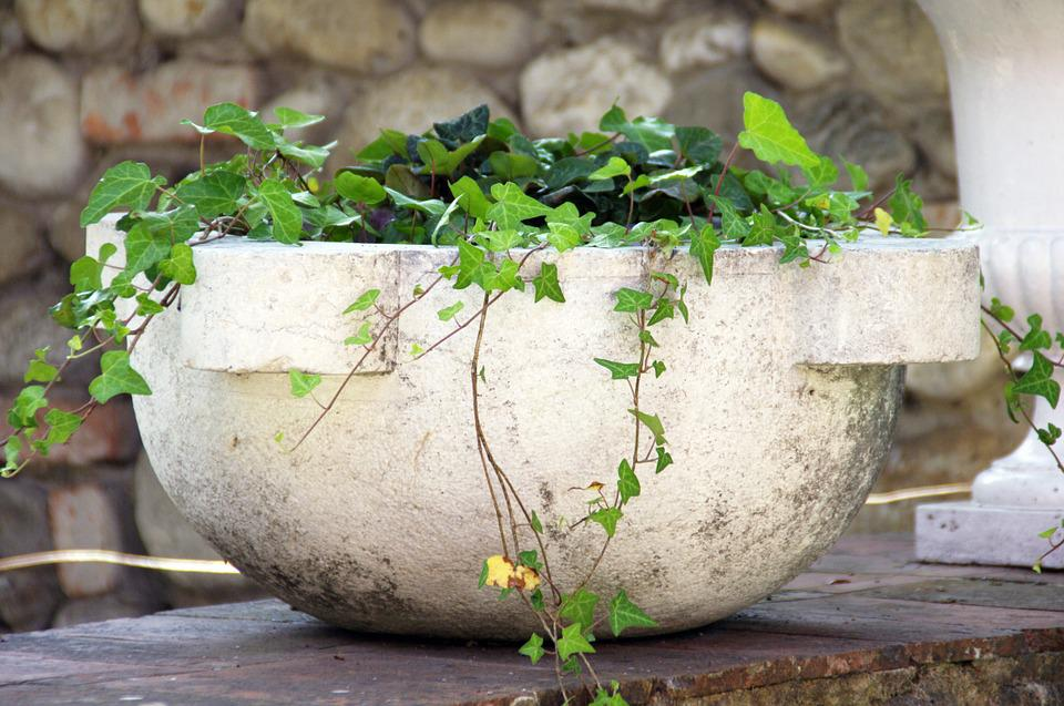 Ivy, Pot, Flower, Flowers, Plants, Stone, Green