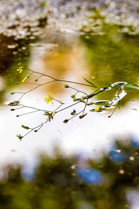 Puddle, Mud Puddle, Flower, Water, Reflection, Nature