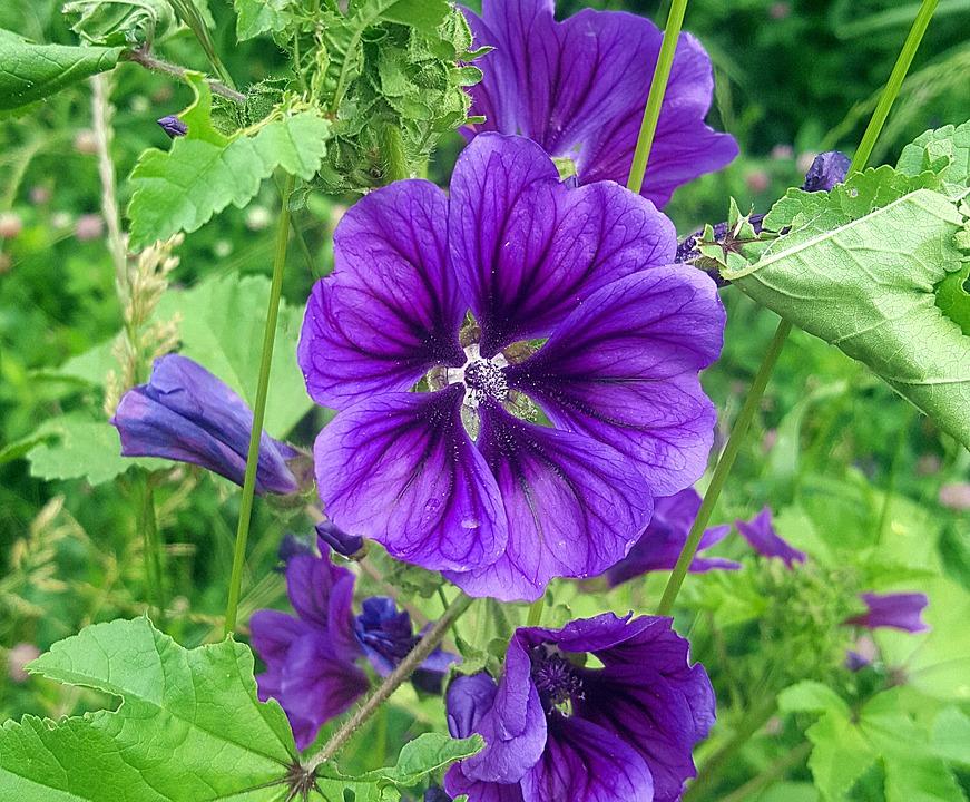 Flower, Beautiful, Nature, Purple, Black