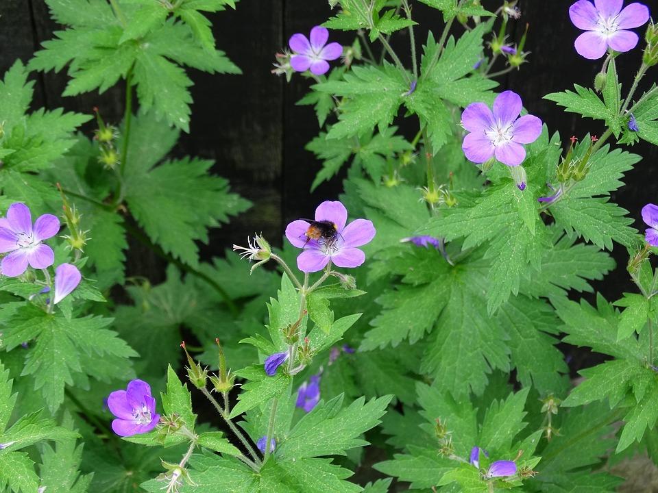 Bumblebee, Flowers, Flower, Nature, Pink, Purple Flower