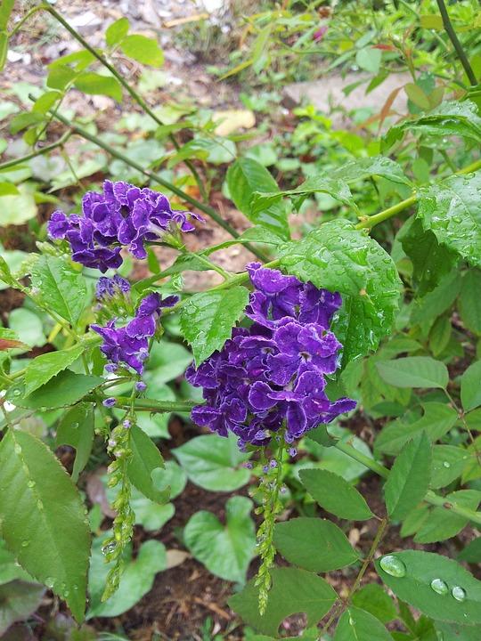 Flower, Purple Flower, Purple, Wild Flower