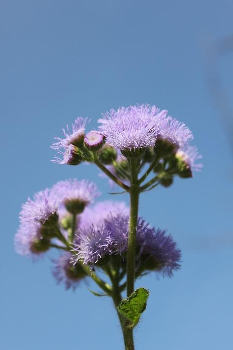 Flower, Purple, Purple Flowers, Plant, Macro, Heaven