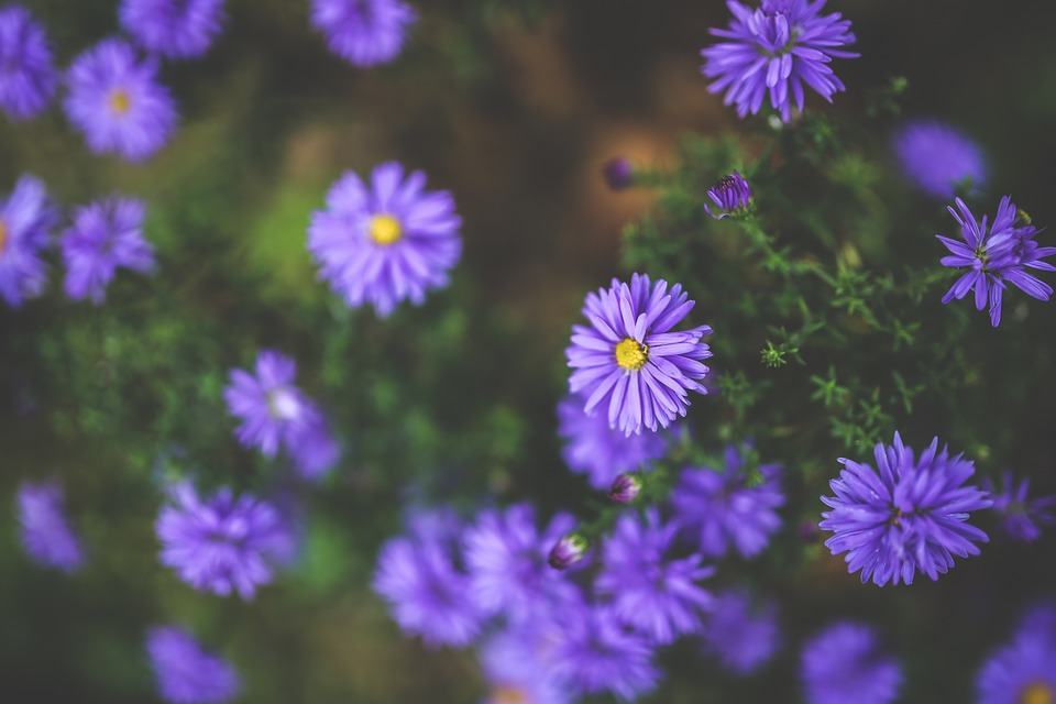 Flower, Flowers, Purple, Violet, Little, Small, Autumn