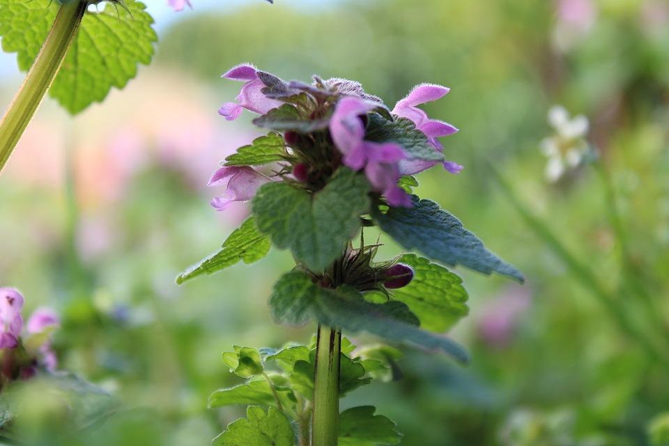 Flower, Purple, Nature