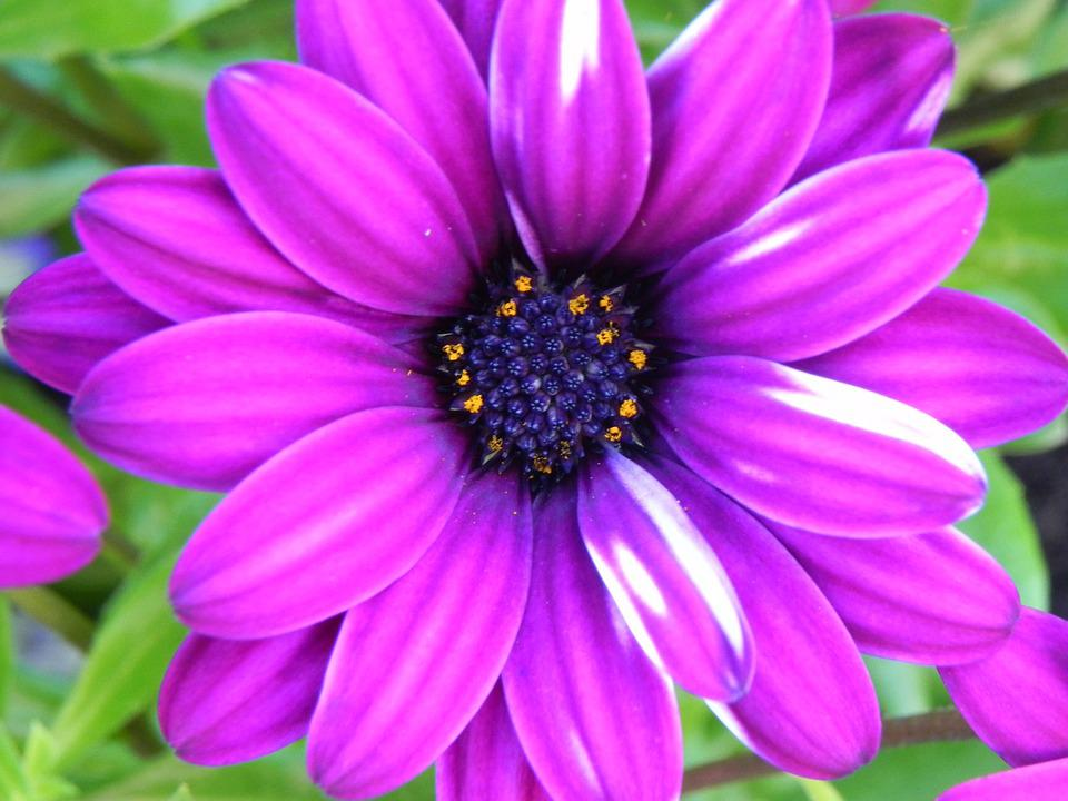 Purple, White, Flower, Small Flower, White Purple