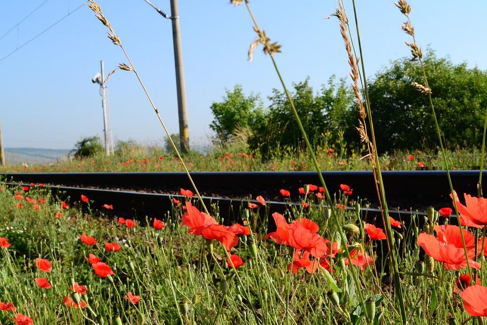 Railway, Red, Flower, Grass, Railroad, Train, Travel