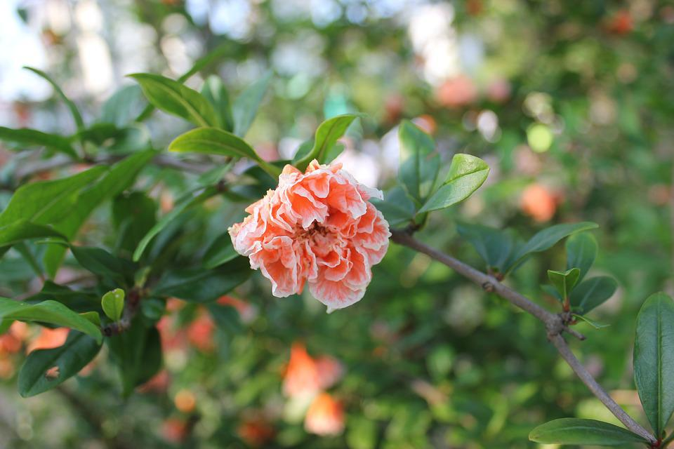 Red Flowers, Green Leaf, Rose, Flower
