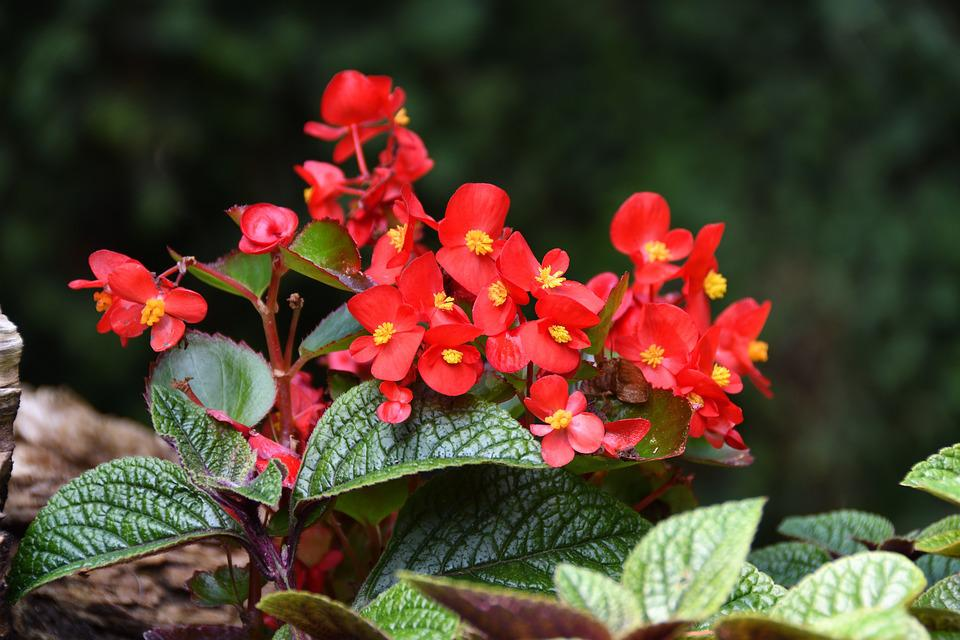 Flowers, Red, Garden, Plant, Flower, Beauty, Color
