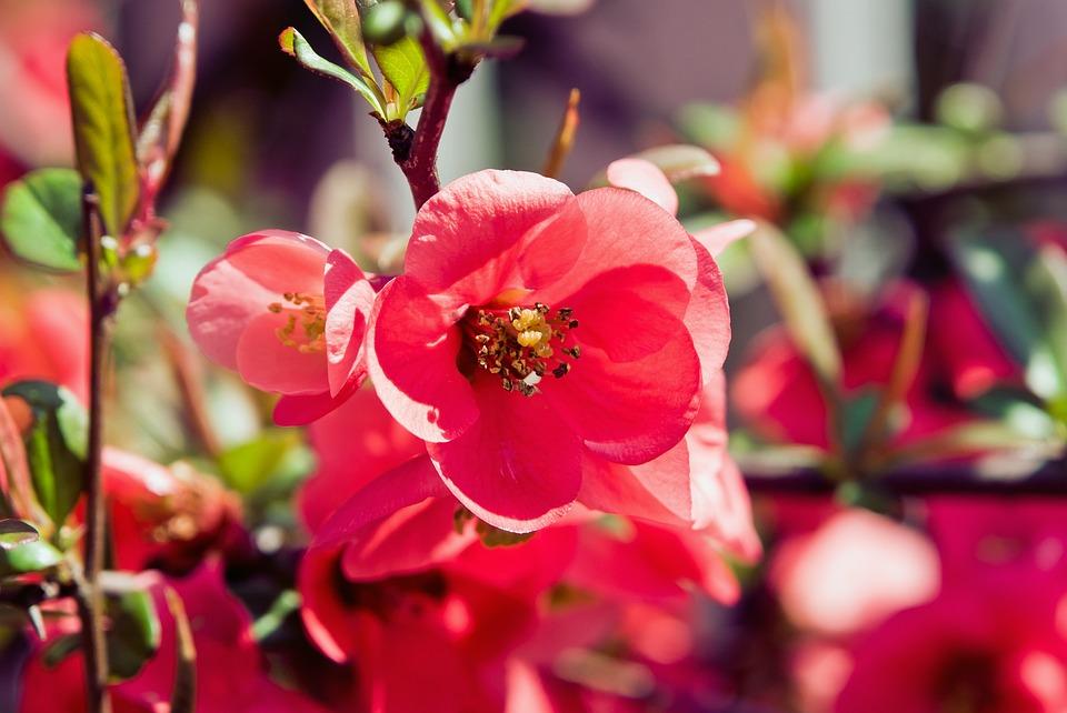 Flower, Garden, Red, Spring, Nature, Flower Garden