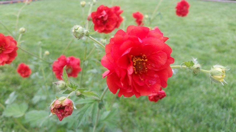 Free photo flower red grass pretty max pixel pretty red flower grass mightylinksfo