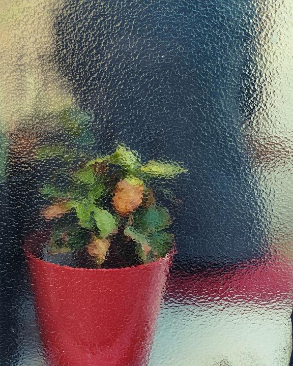 Glass, Red, Flowerpot, Flower, Plants, Nature