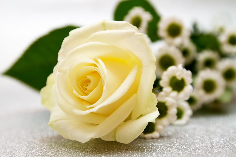 Rose, Flower, Wedding, Love, Flowers, White, Background