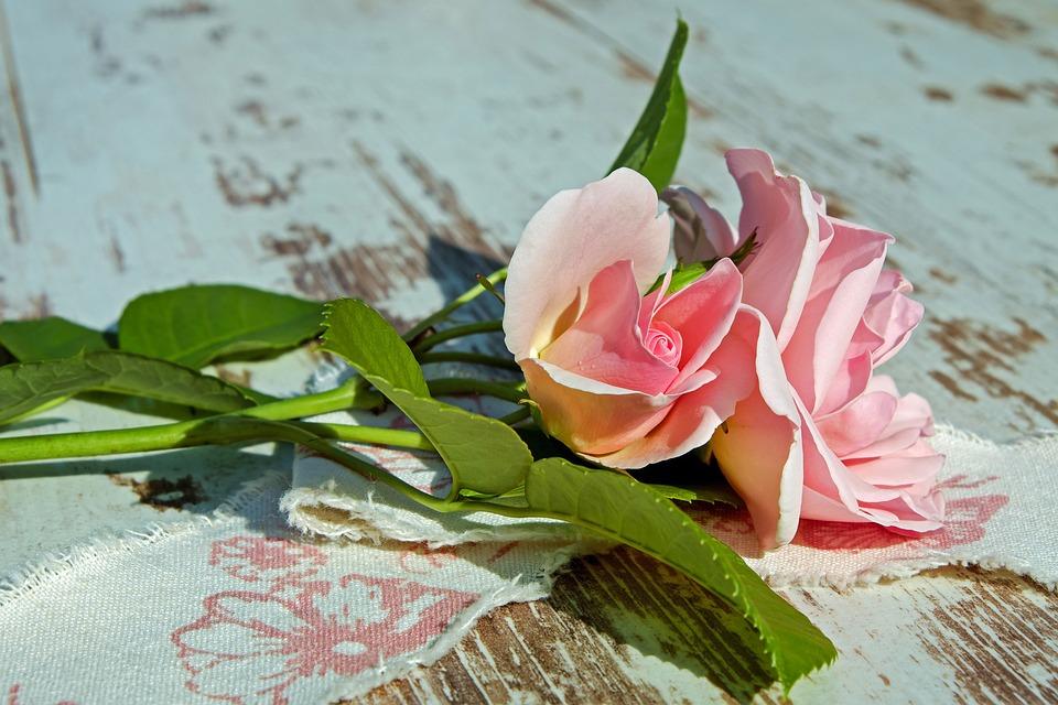 Rose, Pink Rose, Rose Blooms, Pink, Rose Bloom, Flower