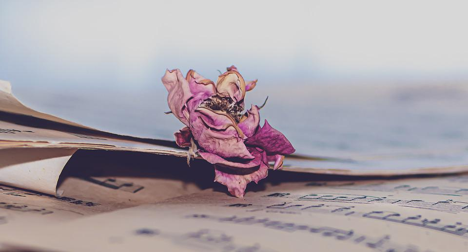 Music Sheet, Music, Dry Rose, Withered, Rose, Flower