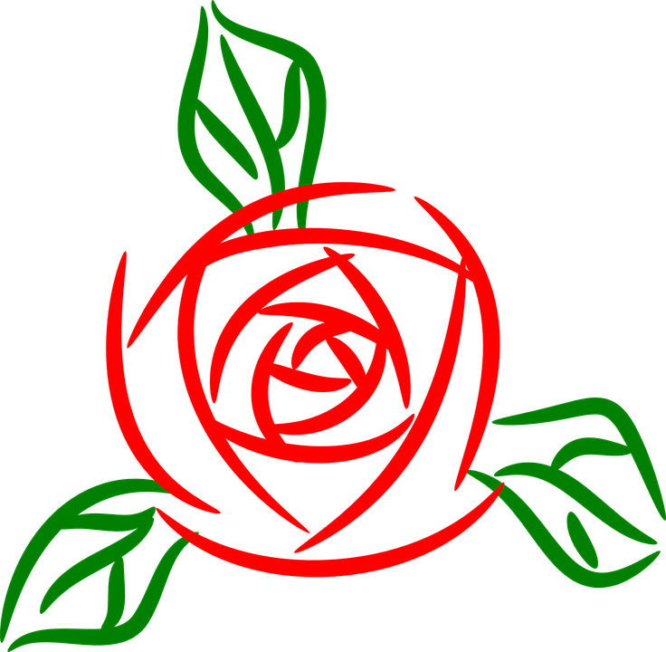 Flower, Rose, Red
