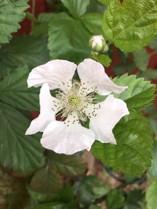Nature, Leaf, Flora, Flower, Season