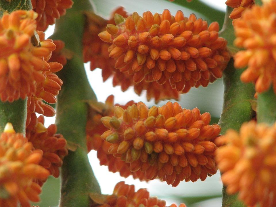 Seeds, Plant, Flower
