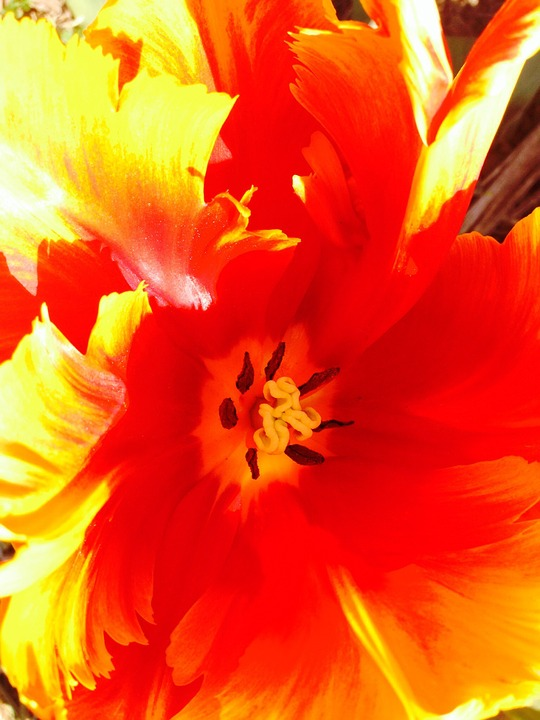 Tulip, Flower, Sharpness Game, Bloom, Green, Party