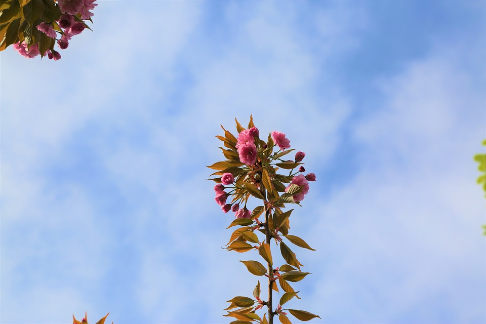 Tree, Nature, Flower, Plant, Leaves, Sky, Blooming