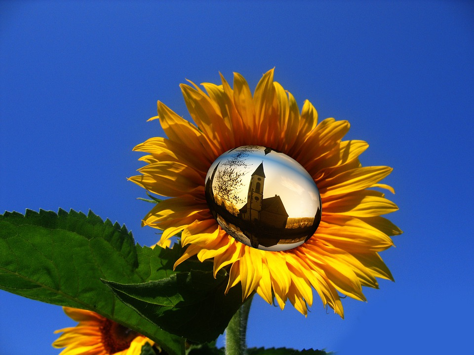 Sun Flower, Yellow, Flower, Sky, Church