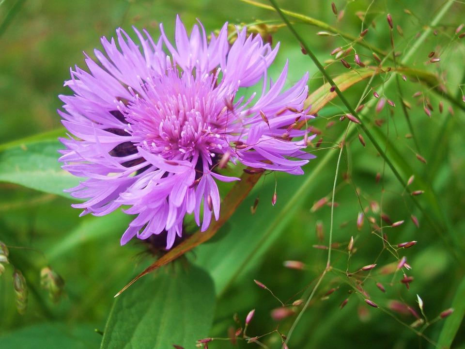 Flower, Slovakia
