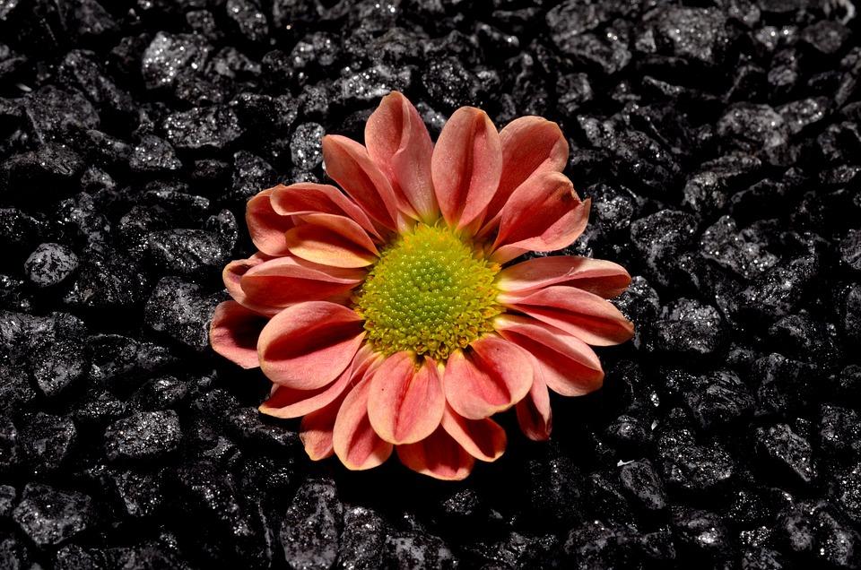 Small, Flower, Black
