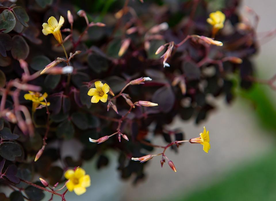 Flower, Plant, Garden, Small Yellow Flower