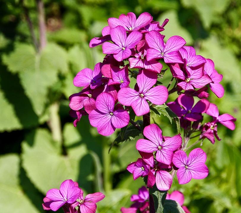 Flower, Nature, Plant, Spring, Blossom, Bloom, Pink