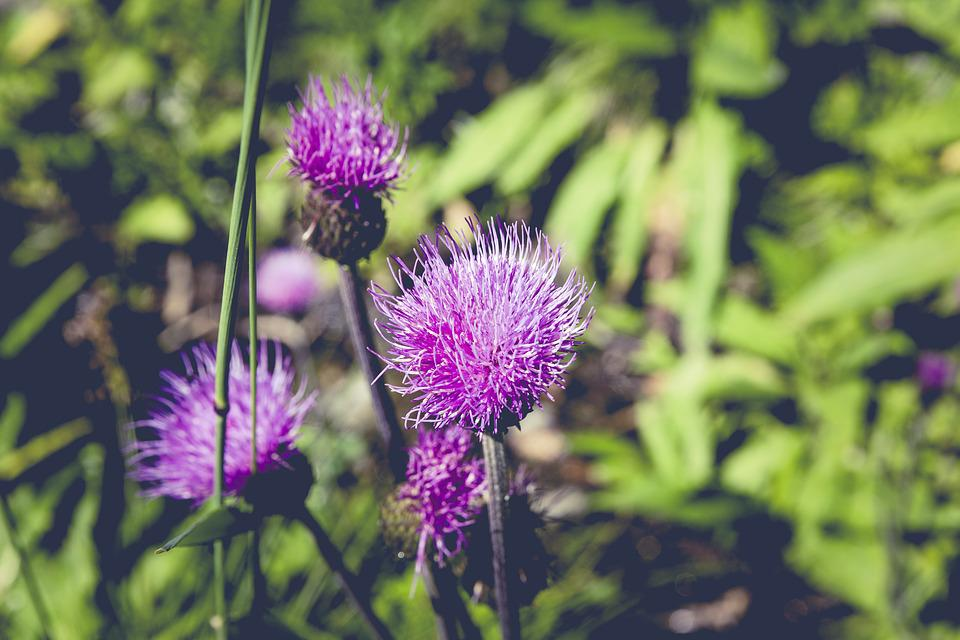 Flower, Meadow, Nature, Blossom, Bloom, Summer, Spring