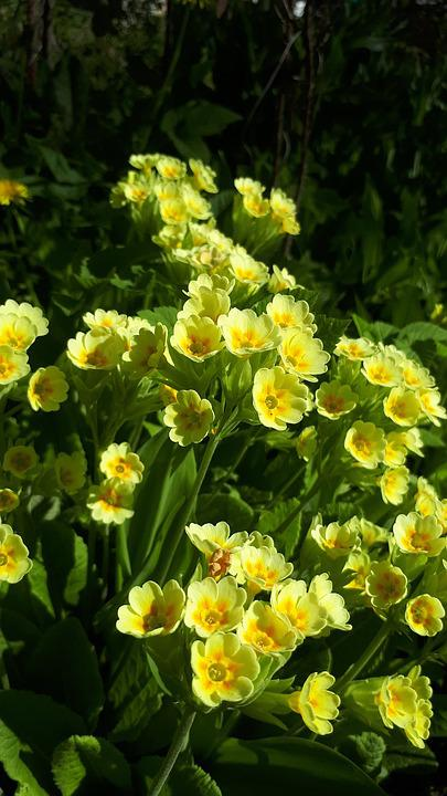 Free photo flower spring color nature yellow garden plant max pixel yellow flower nature spring garden plant color mightylinksfo Images