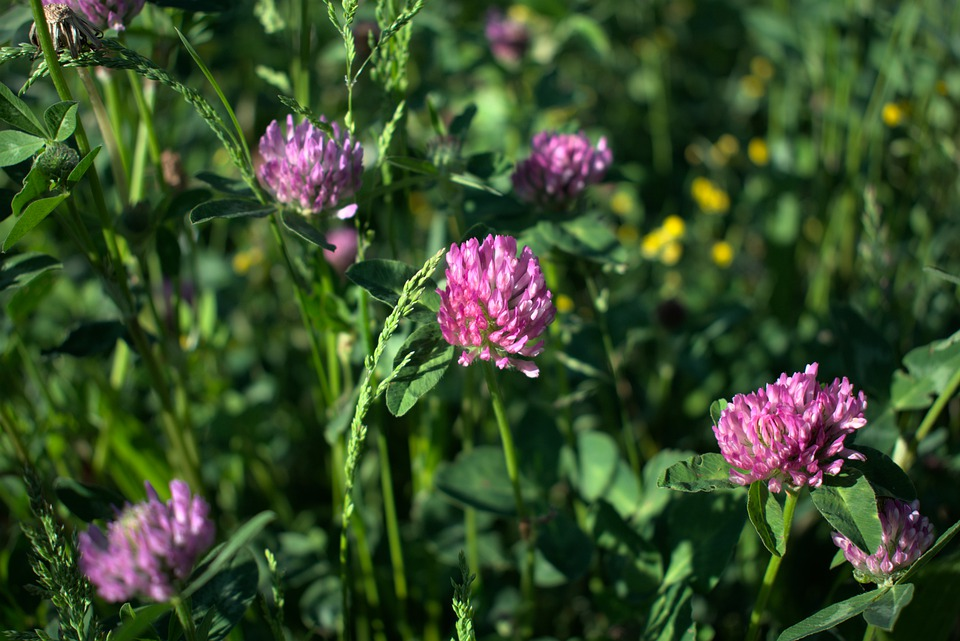 Meadow, Flower, Spring, Nature, Flower Meadow