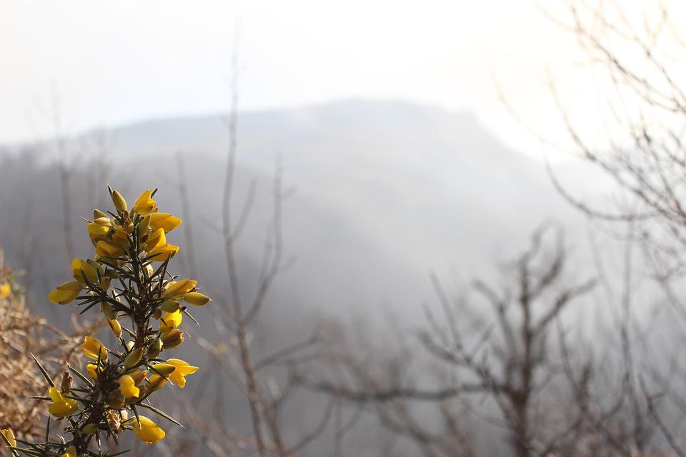 Flowers, Flower, Winter, Spring, Leaf, Hiking, Path
