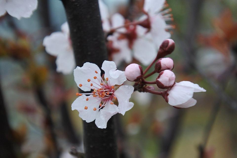 Flower, Spring, Natural