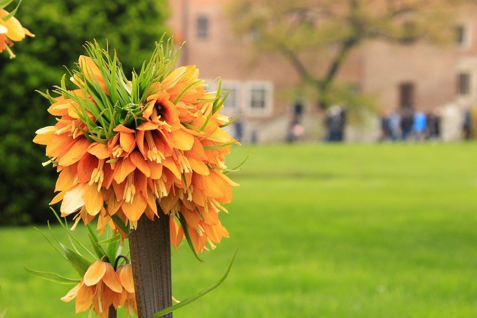 Flower, Spring, Garden, Nature, Plant, Orange, Plants