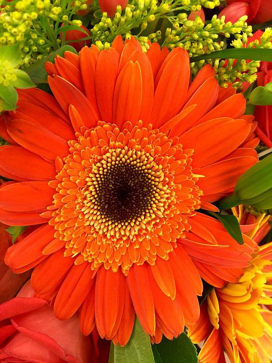 Flower, Gerbera, Macro, Spring, Orange