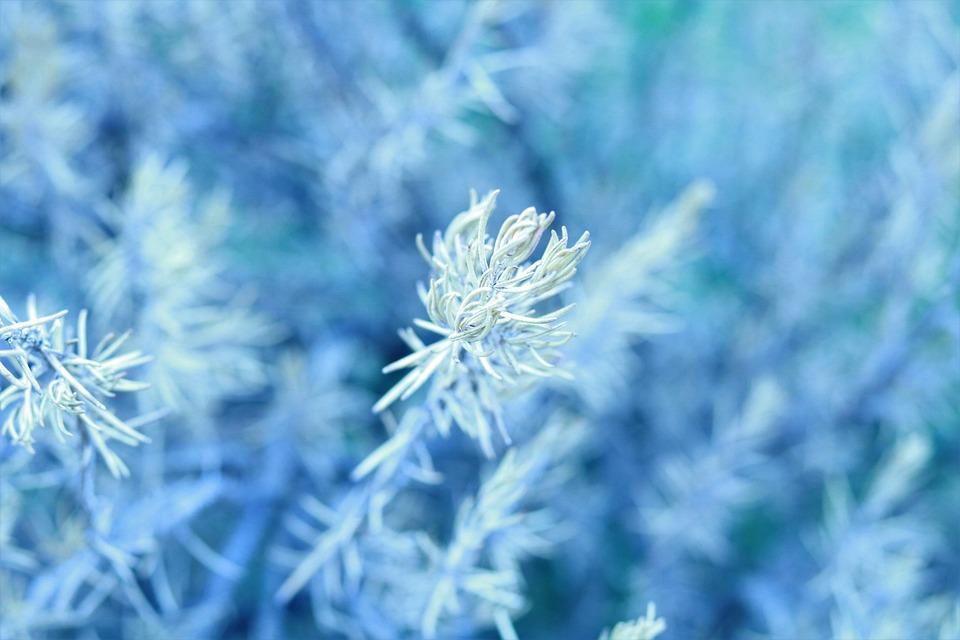Nature, Plant, Truth, Spring, Garden, Flora, Flower