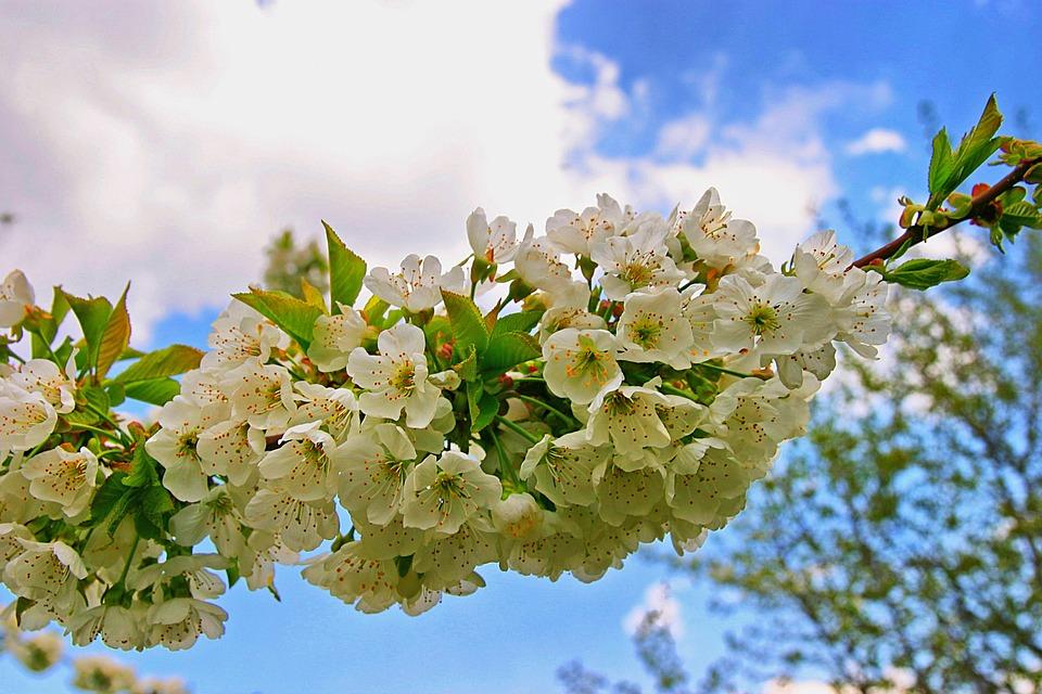 Spring, Sky, Flower
