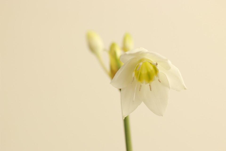 Flower, White, White Flowers, Cut Flower, Spring