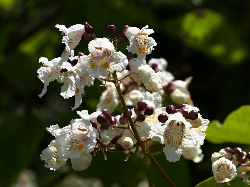Still Life, Flower