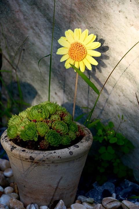 Pot, Stone Garden, Arrangement, Flower, Stones