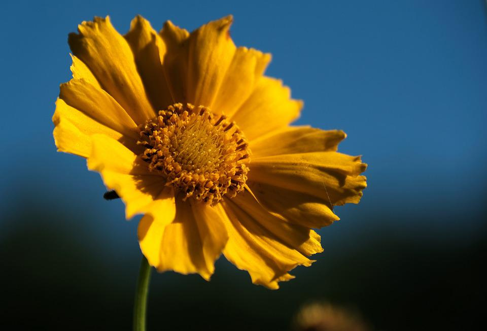 Flower, Blossom, Bloom, Plant, Yellow, Leaves, Summer