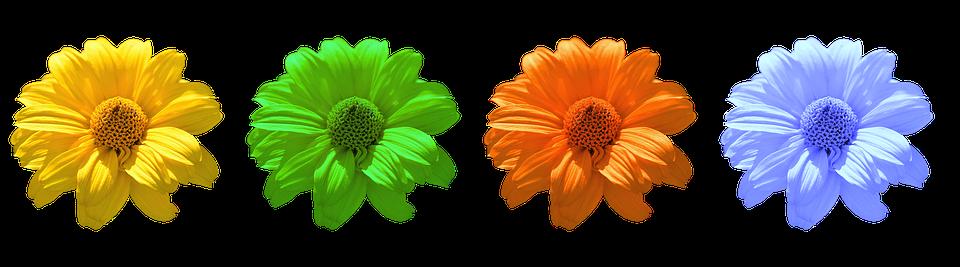 Flower, Flowers, Daisy, Summer, Blue Blossom
