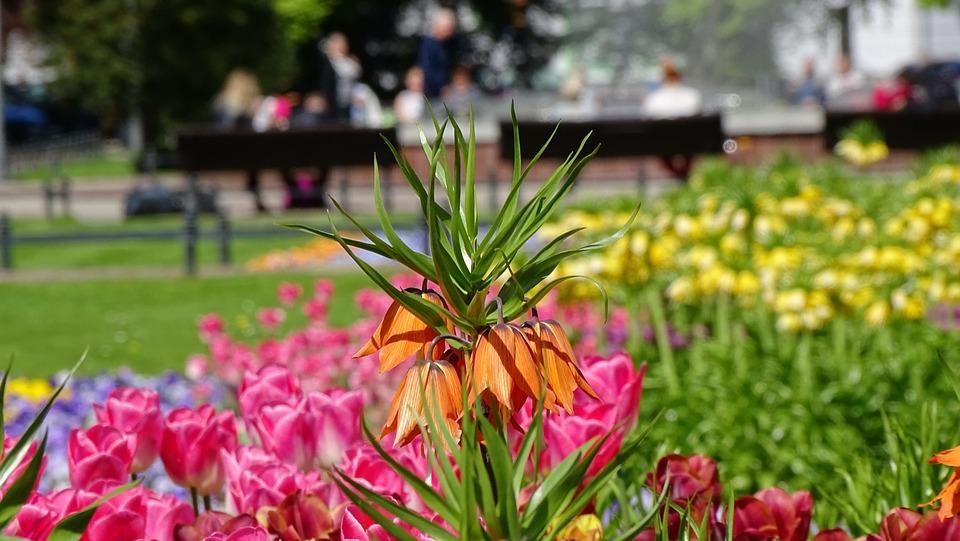 Flower, Nature, Garden, Plant, Summer, Alive