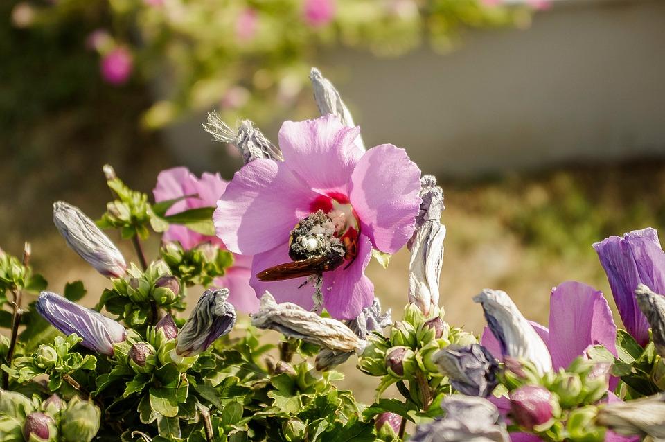 Flower, Nature, Plant, Garden, Outdoors, Summer